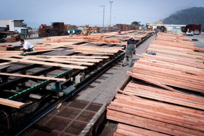 Men removing boards from a long conveyor belt