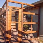 Outdoor cat cage and shelter.