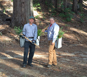 Man and woman with redwood seedlings getting ready to plant them
