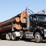 Whole redwood logs on a log truck.